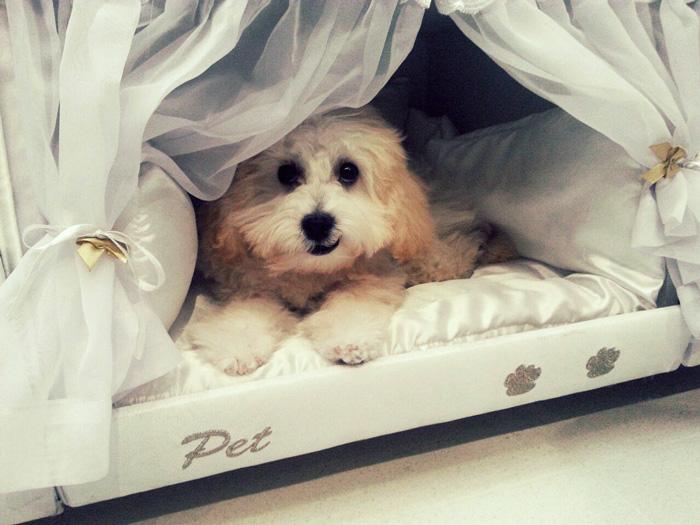 Revolučná posteľ! Od dnes môžete spať so svojím psíkom nerušene