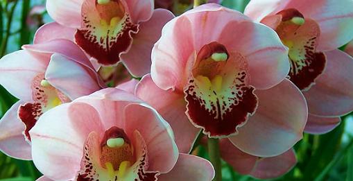 Kvety sú symbolom krásy. Aký je ten pravý pre tvoju polovičku?