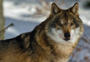 Slovák nafotil krásne zábery divých zvierat, ako si užívajú zimu
