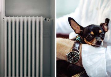 Kompletný zoznam zabudnutých vecí v aute: Niektorí ľudia si nespomenuli na radiátor, psa či dieťa!