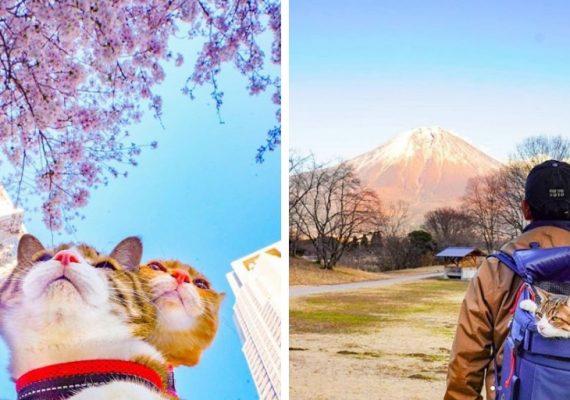 Tieto fotky budú milovať všetci mačkofilovia: Japonec cestuje aj so svojimi dvoma mačkami, navštívil s nimi už viac ako 1000 destinácií