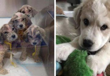 Ďalší otrasný prípad nehumánneho správania sa k zvieratám: šesť psíkov skoro prišlo o život, zachránili ich štyri deti