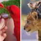 Rozkošní zvierací kamaráti. Tieto top fotky maznáčikov vás chytia za srdce!
