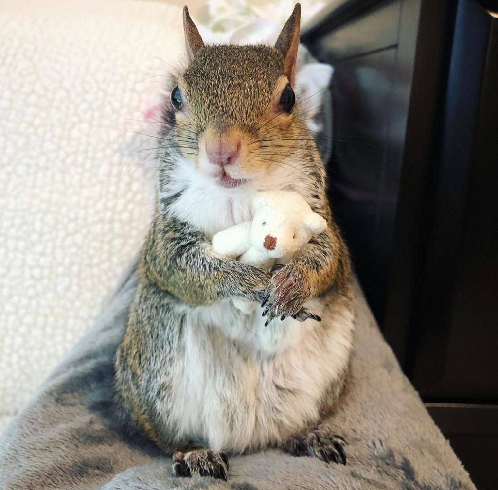 veverička jill